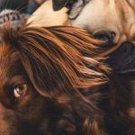banner-adorable-animals-breed-374825