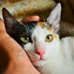 animal-animal-portrait-cat-790033