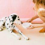 blond-hair-bowl-dalmatian-2053922
